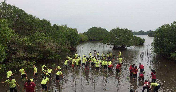 Penanaman Mangrove di Pulau Serangan
